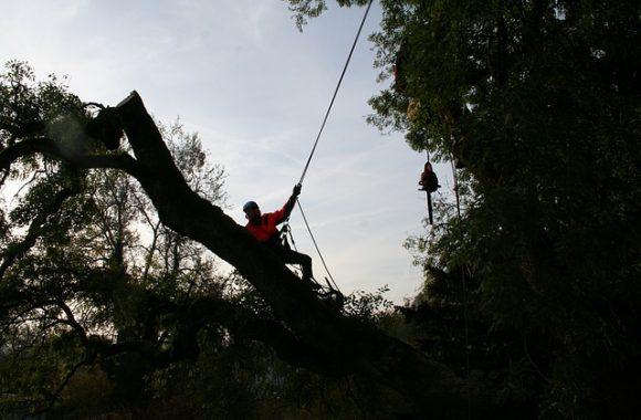 tree-climbers-4820109_640